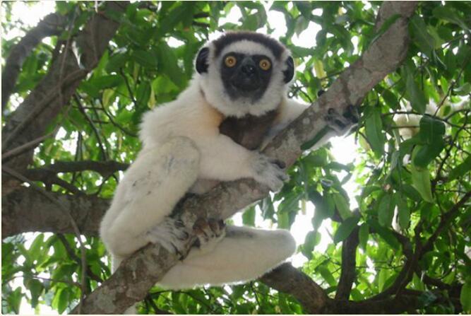 Madagascar - Kingdom of the Lemurs 3