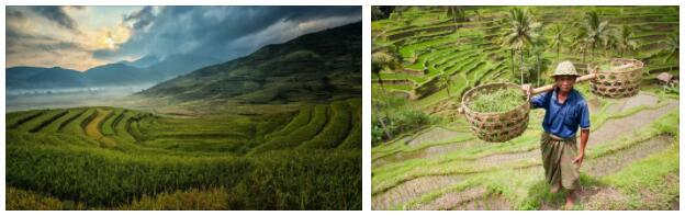 Asian Agriculture
